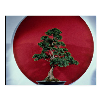Inspiring Bonsai tree Postcard