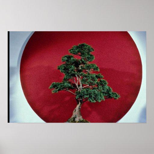 Inspiring Bonsai tree Poster
