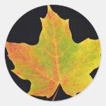 inspiring Sugar maple yellow leaf Round Sticker