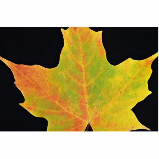 inspiring Sugar maple yellow leaf Standing Photo Sculpture