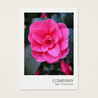 Instant Photo 067 - Pink Camellia Business Card