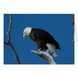 Intense Bald Eagle Card
