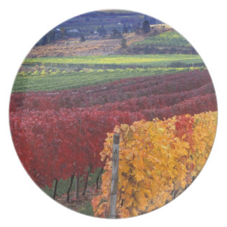 Intense red and yellow fall colors on Gehring Plate