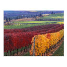 Intense red and yellow fall colours on Gehring Postcard