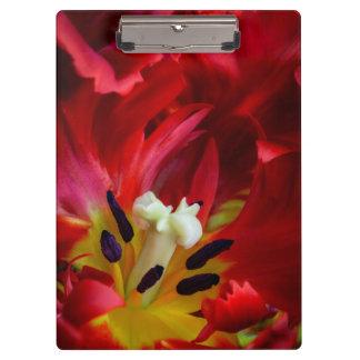 Interior of parrot tulip flower clipboards