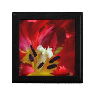 Interior of parrot tulip flower gift box