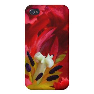Interior of parrot tulip flower iPhone 4 case