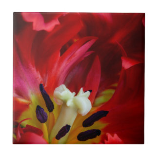 Interior of parrot tulip flower tile