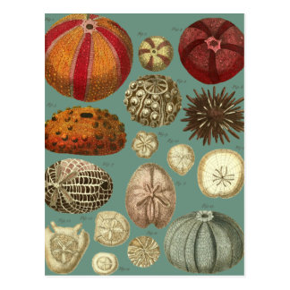Intestina et Mollusca Linnaei Post Cards