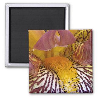 Intimate Iris Magnet
