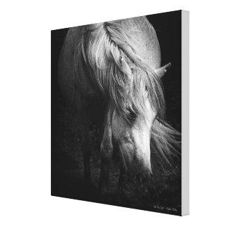 Into the Light - Dartmoor Pony MEDIUM Canvas Prints