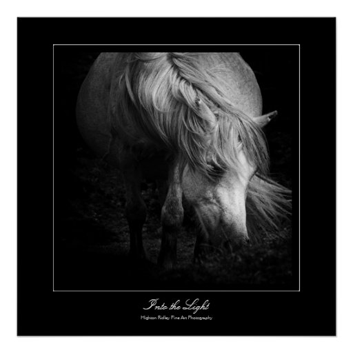Into the Light - Dartmoor Pony Poster