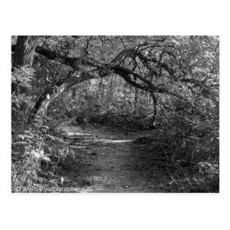 Into the shadow postcard
