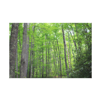 Into the Woods Canvas Print - Smokey Mountains