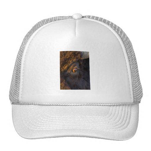 Intruder Trucker Hats