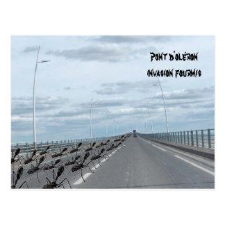 invasion ants (ant) bridge of oléron postcard