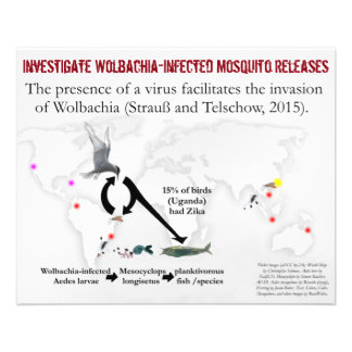 Investigate Wolbachia 2-Sided Flyer by RoseWrites