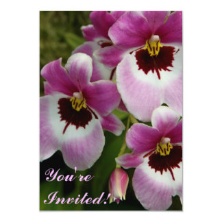 Invitation - Pansy Orchid