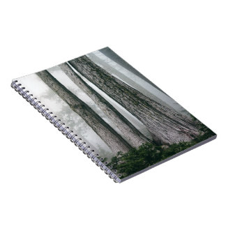Invoking the Forest Notebook