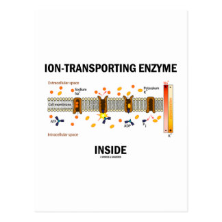 Ion-Transporting Enzyme Inside Active Transport Post Cards