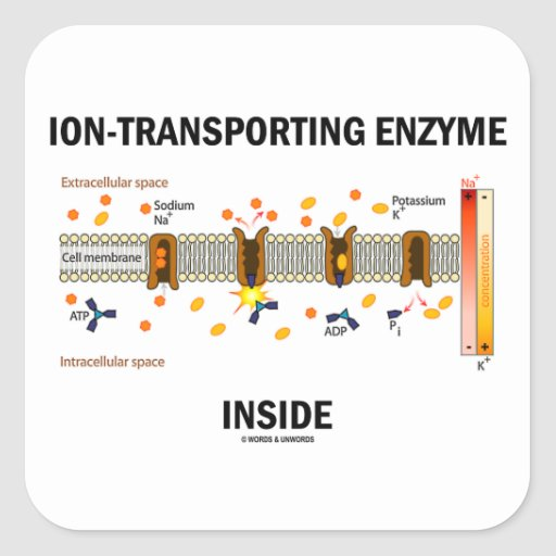 Ion-Transporting Enzyme Inside (Active Transport) Sticker