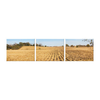 Iowa Cornfield Panorama Photo - 3 Stretched Canvas