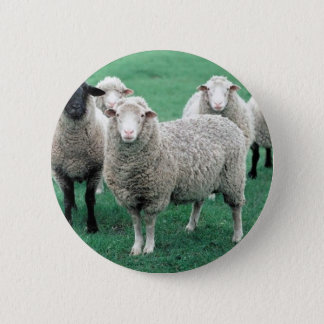 Iowa Sheep 6 Cm Round Badge