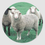 Iowa Sheep Classic Round Sticker