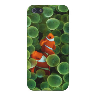 iPhone4 : Coral Reef Covers For iPhone 5