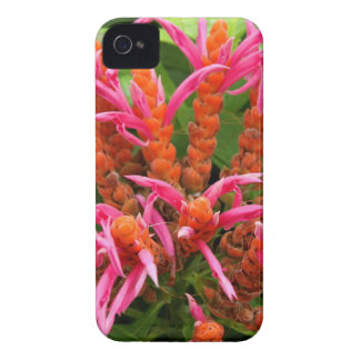 iPhone 4 Case - Coral Aphelandra