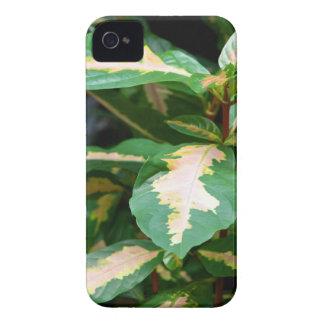 iPhone 4 Case - Tricolored Caricature Plant