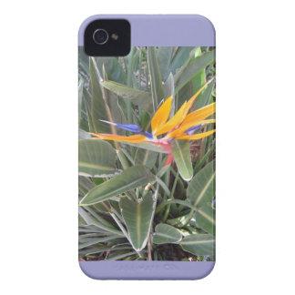 iphone 4S iPhone 4 Case-Mate Case