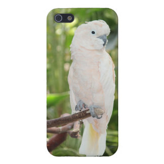 iPhone 5/5S Cockatoo Parrot Glossy Finish Case iPhone 5/5S Cases
