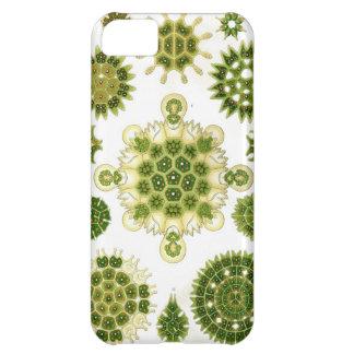 IPHONE 5 algae case