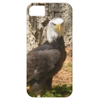 iPhone 5 Case - American Bald Eagle