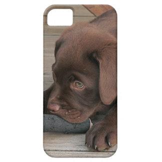 Iphone 5 case with chocolate Labrador retriever