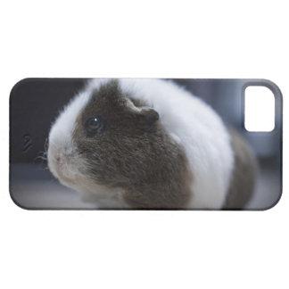 iPhone 5 case with cute guinea pig
