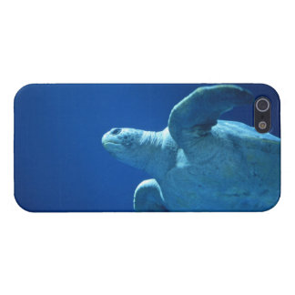 iphone 5, Sea Turtle Glossy Case iPhone 5 Cases