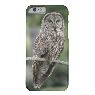 iPhone 6 Case - Great Gray Owl