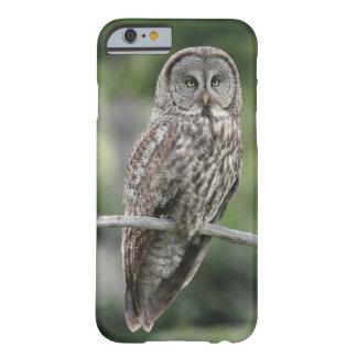 iPhone 6 Case - Great Grey Owl