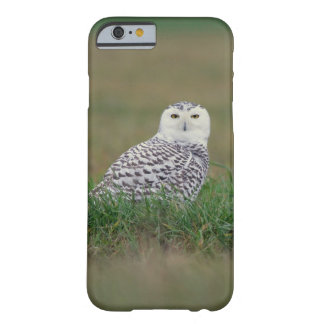 iPhone 6 Case - Snowy Owl in the Grass