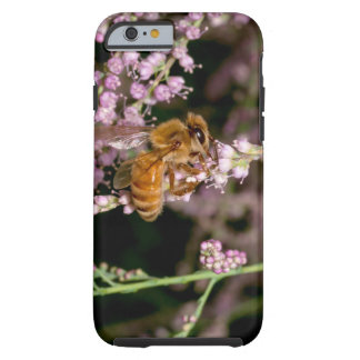 iPhone Case -- Foraging Bee