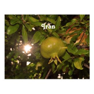 Iran Pomegranate Postcard