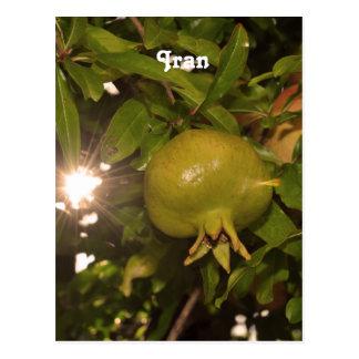 Iran Pomegranate Post Cards