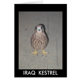 IRAQ  KESTREL BLANK CARD