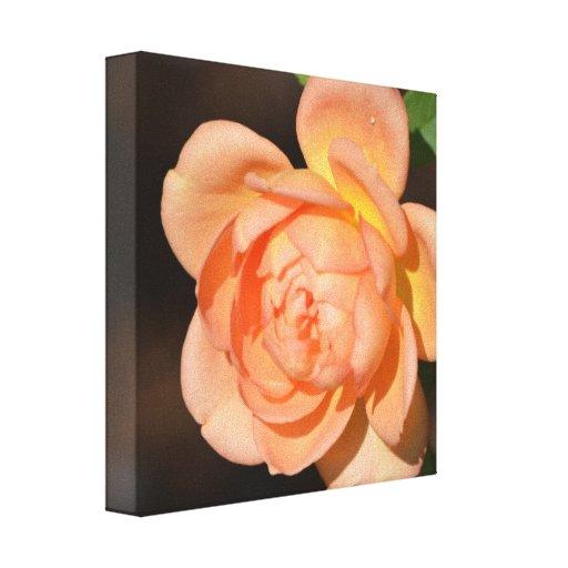 Iraqi Rose Stretched Canvas Print