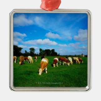 Ireland, Herd Of Cattle Grazing Silver-Colored Square Decoration
