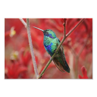Iridescent Shine Photo Print