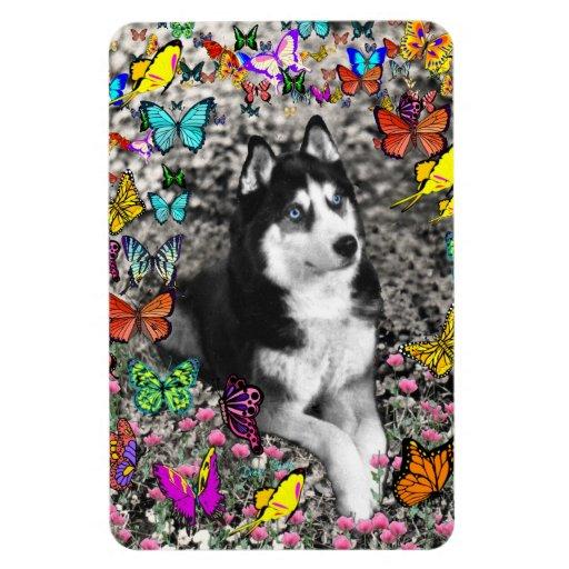 Irie the Siberian Husky in Butterflies Rectangular Magnet