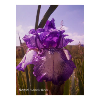 Iris 2 poster